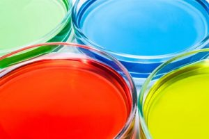 Image of biotech petri dishes - medical translation service