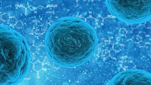 Image of stem cell research. Medical document translation UK