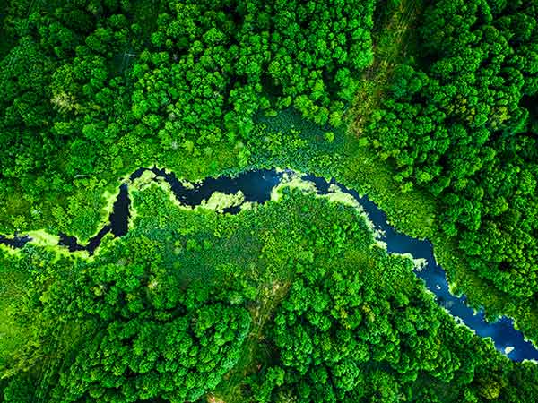 aerial view of a jungle river